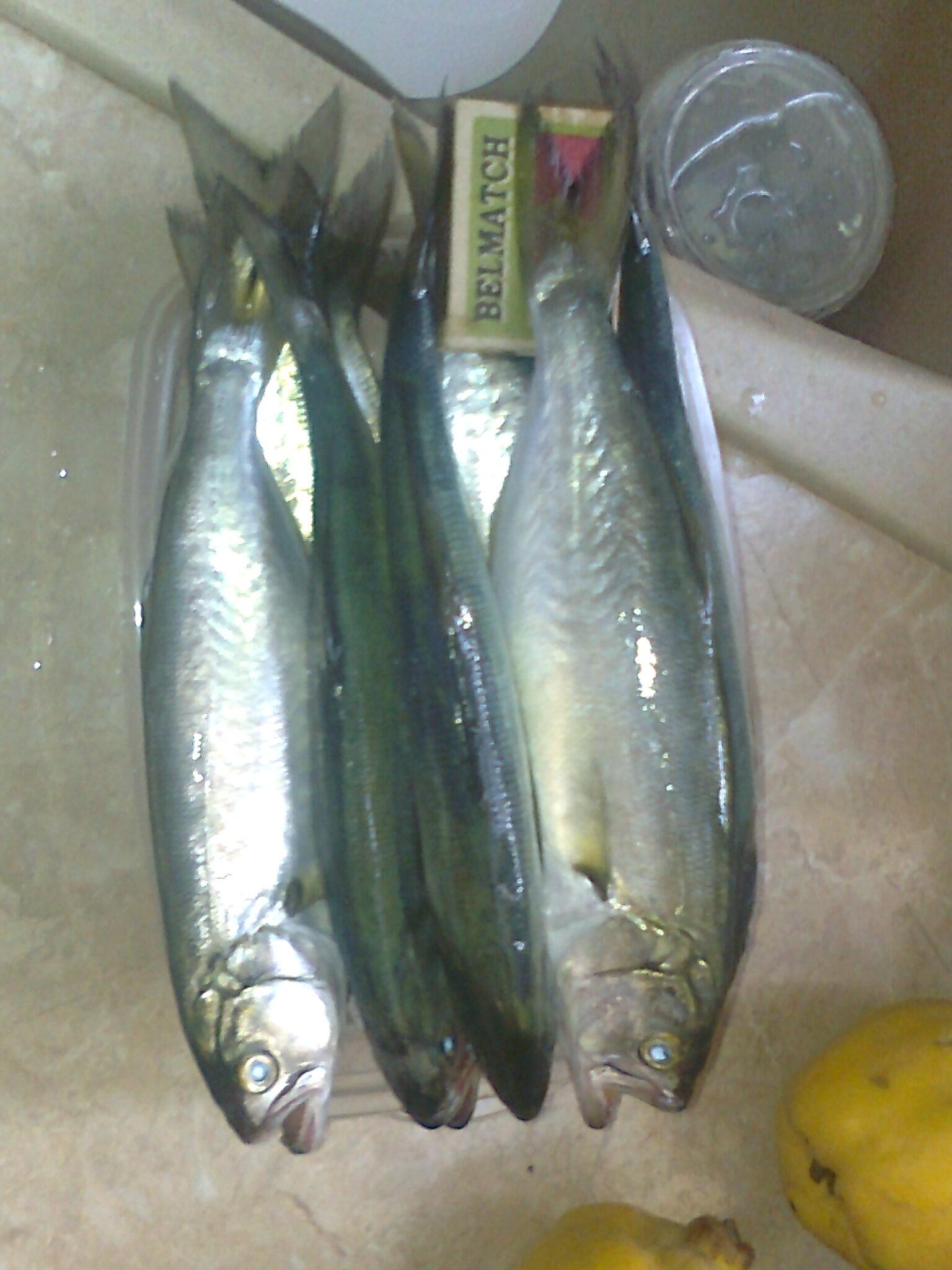 Как приготовить катыши для рыбалки